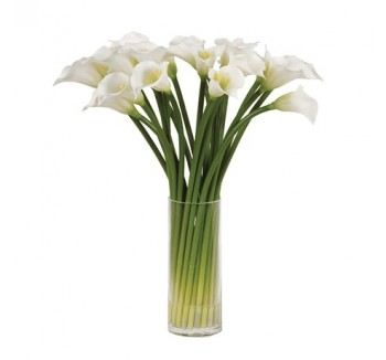 White Calla Lilies in Glass Column Vase