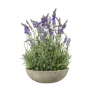 Large Potted Lavender Bowl